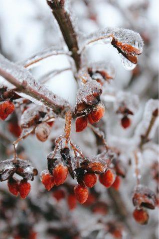 The beauty of winter: #optoutside