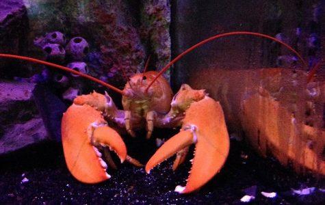 Galway marine biologists travel to aquarium