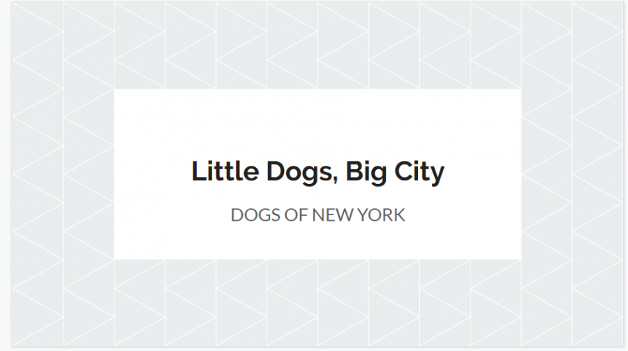 Little Dogs, Big City