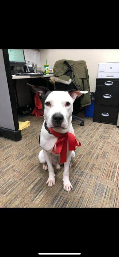 Missing dog found!
